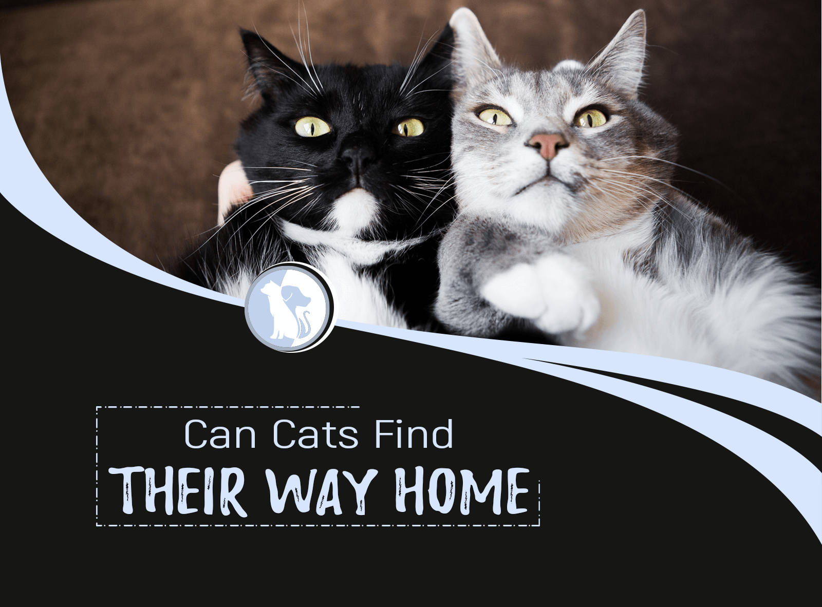 Can Cats Find Their Way Home?