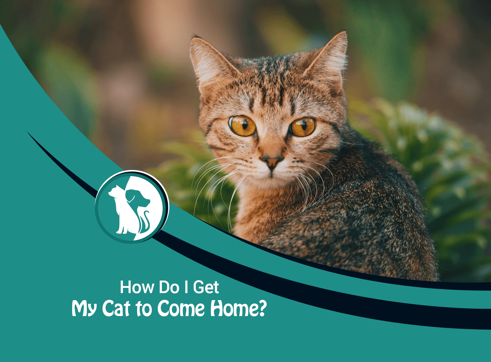 How Do I Get My Cat to Come Home?