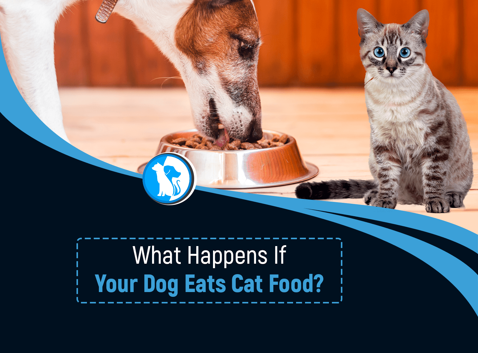 What Happens If Your Dog Eats Cat Food?