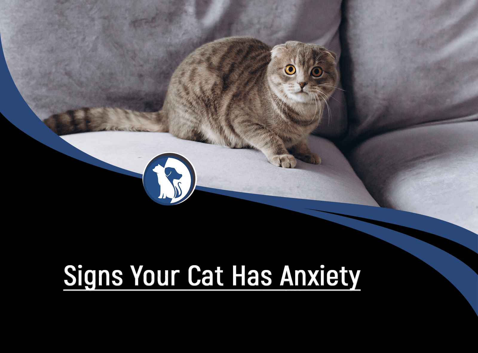 Signs Your Cat Has Anxiety and How to Treat It