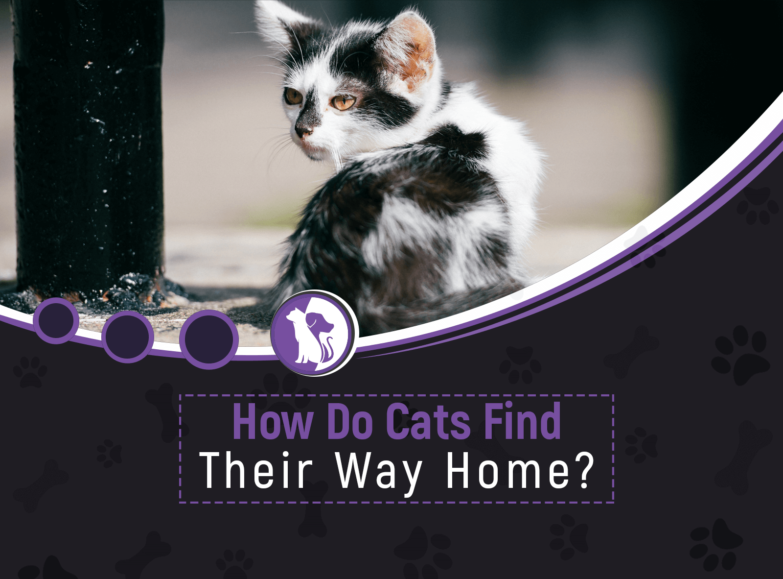 How Do Cats Find Their Way Home?
