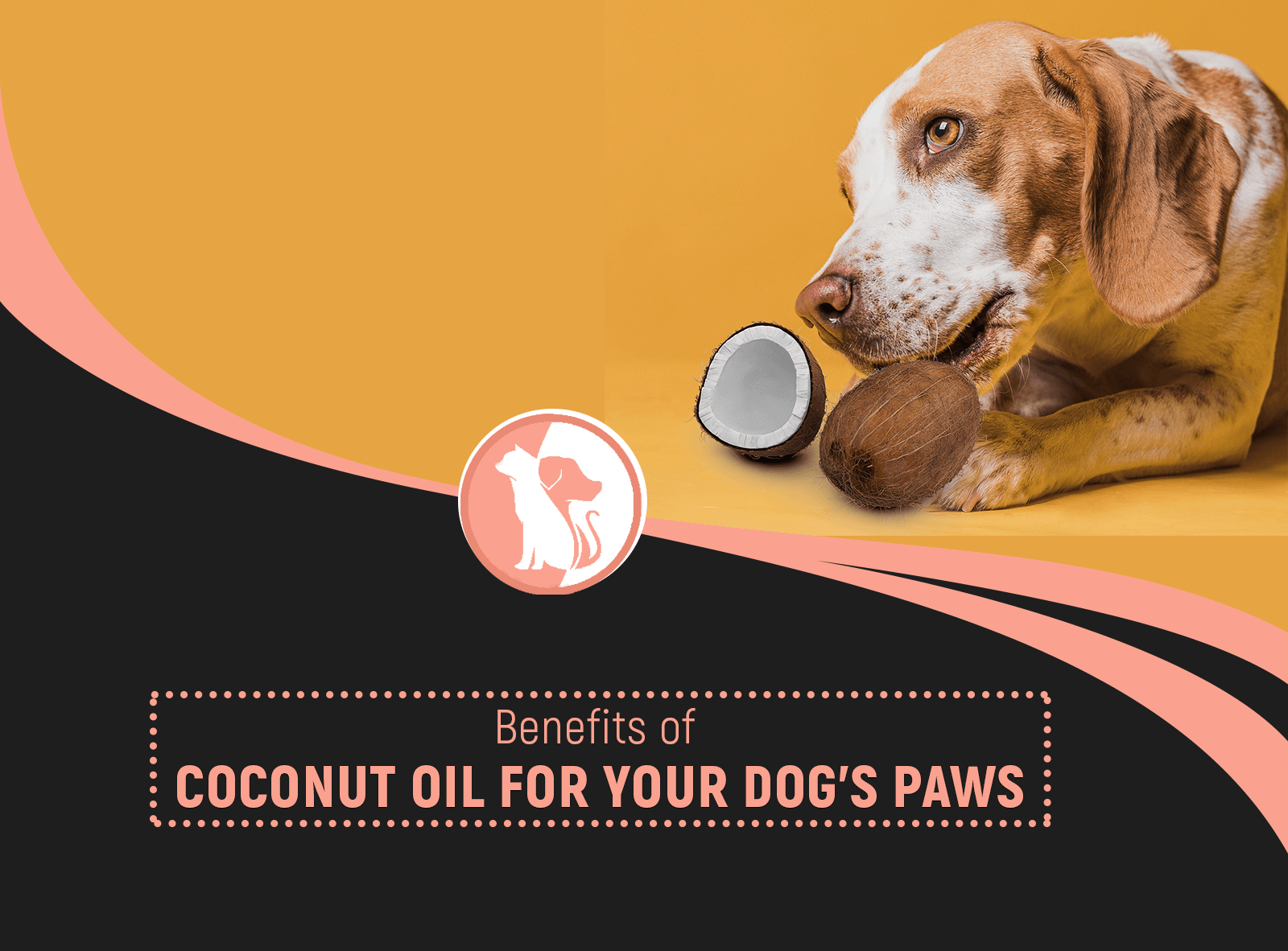 Benefits of Coconut Oil for Your Dog's Paws