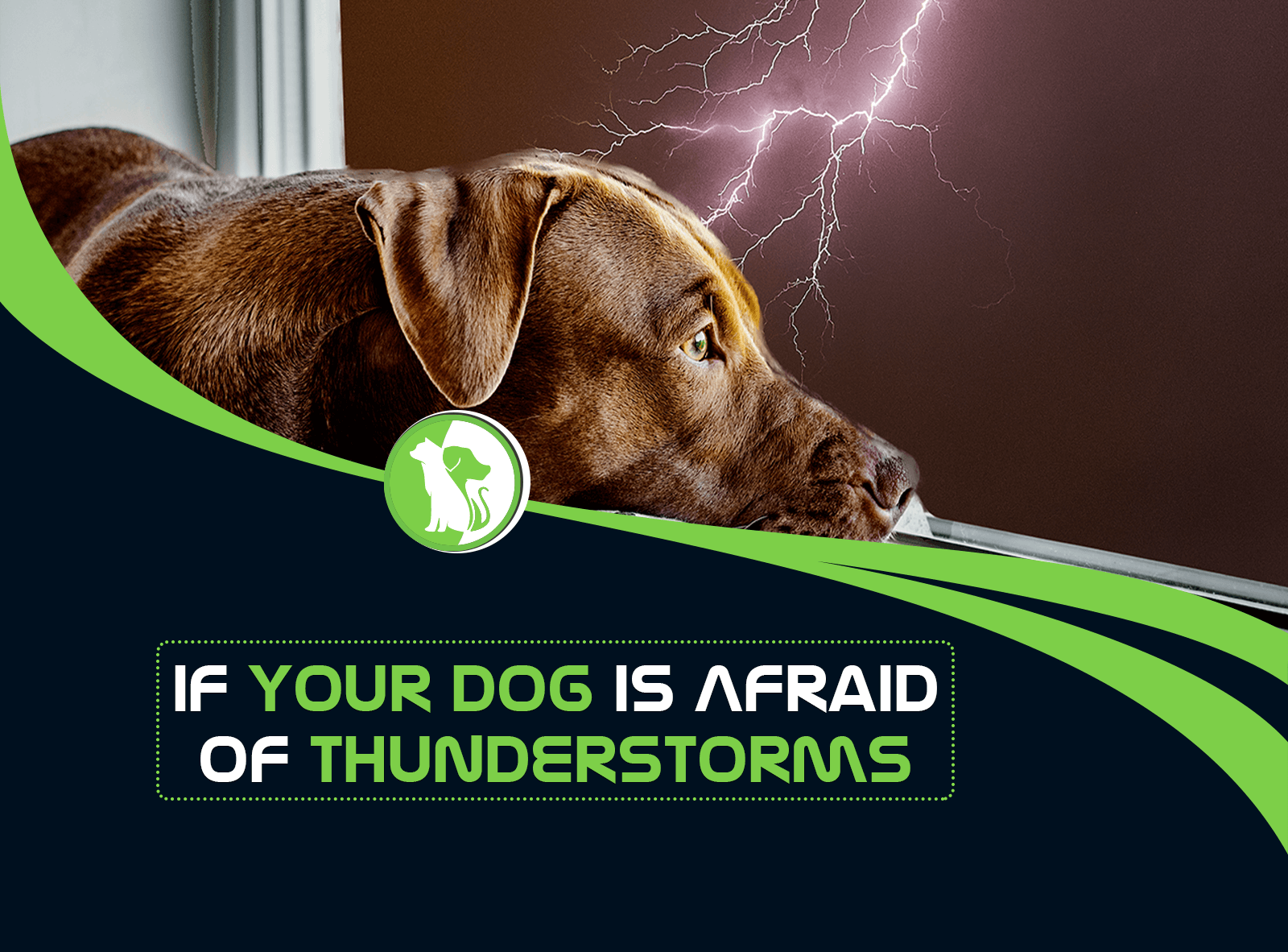 What to Do If Your Dog Is Afraid of Thunderstorms