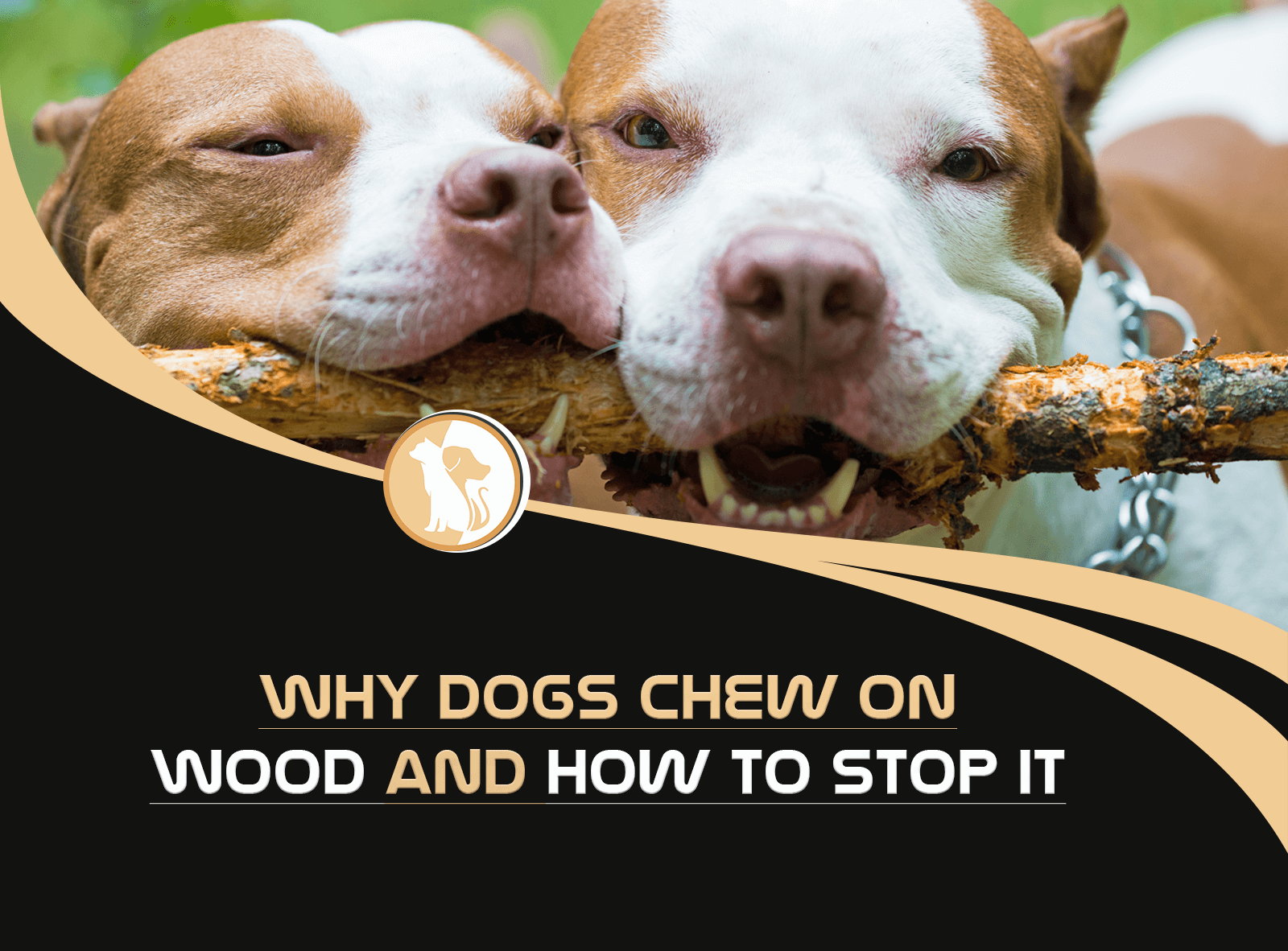 Reasons Why Dogs Chew On Wood And How To Stop It