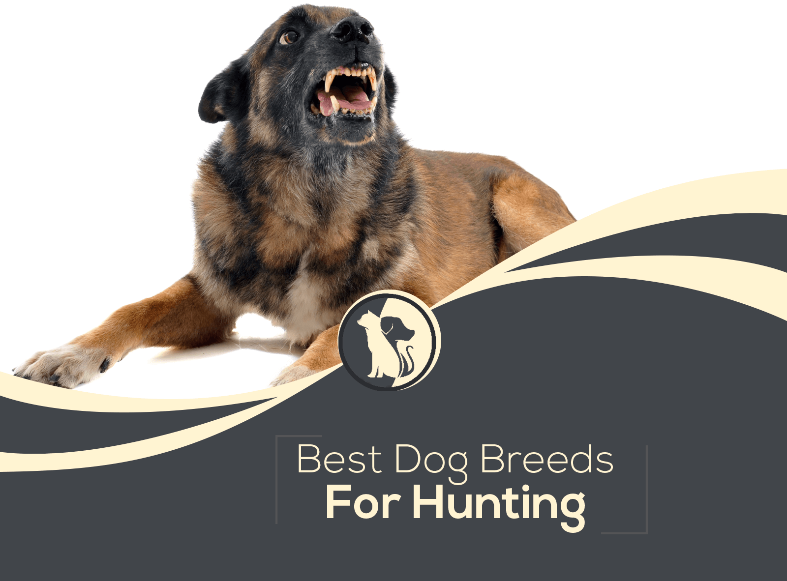 Top 10 Best Dog Breeds for Hunting