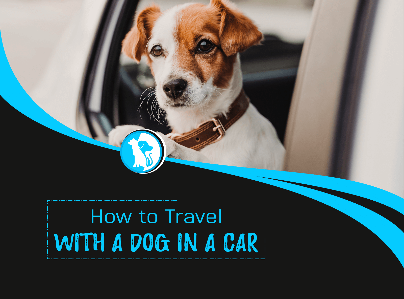 How to Travel with a Dog in a Car?