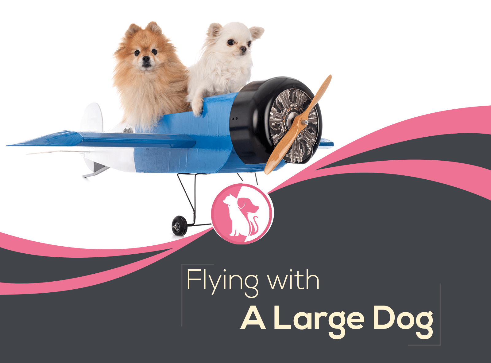Flying with a Large Dog? Everything You Should Know