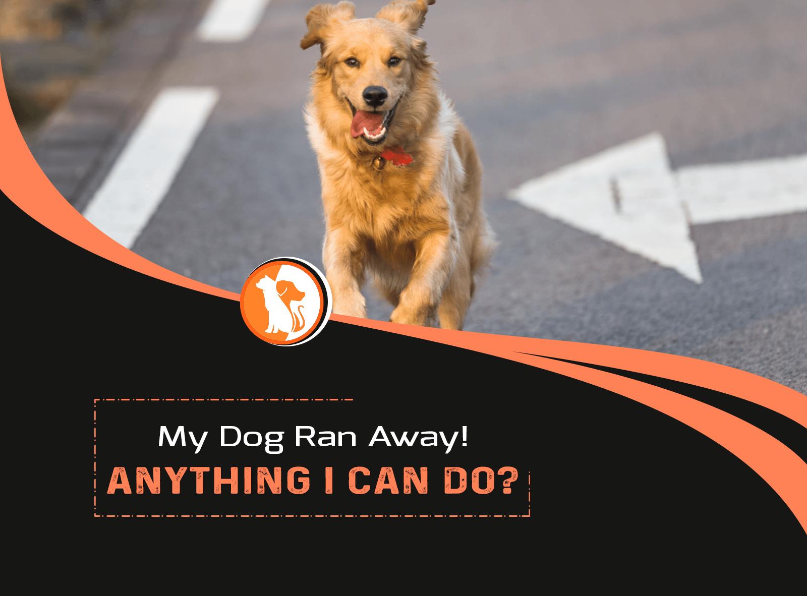 My Dog Ran Away! Anything I Can Do?