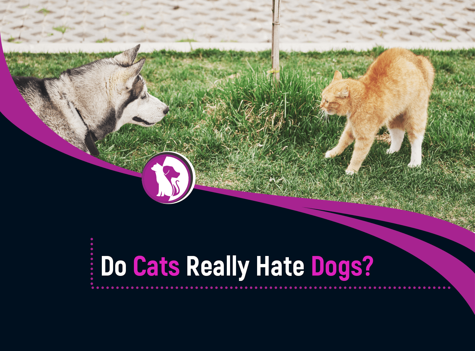 Do Cats And Dogs Hate Each Other? Here Are Some Facts