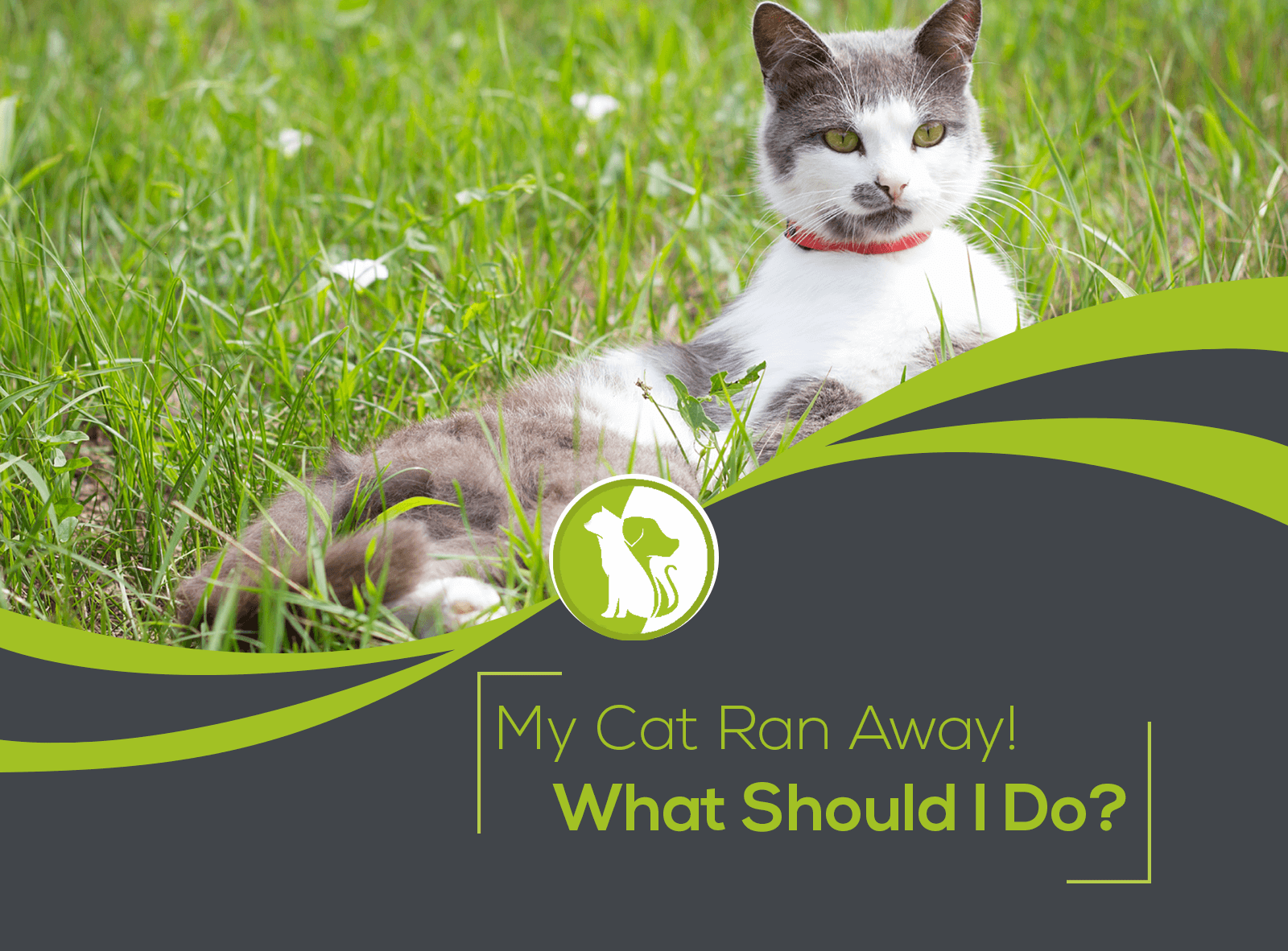 My Cat Ran Away! What Should I Do?
