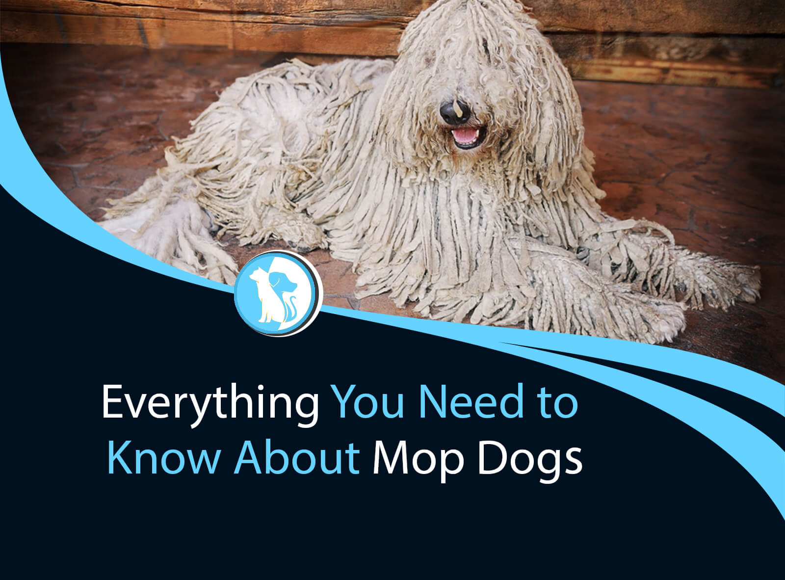 Everything You Need to Know About Mop Dogs