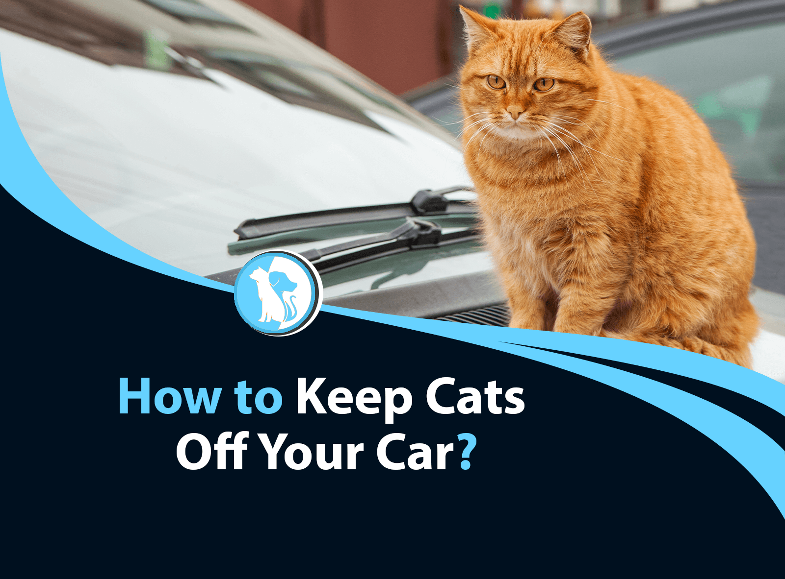 How to Keep Cats Off Your Car?