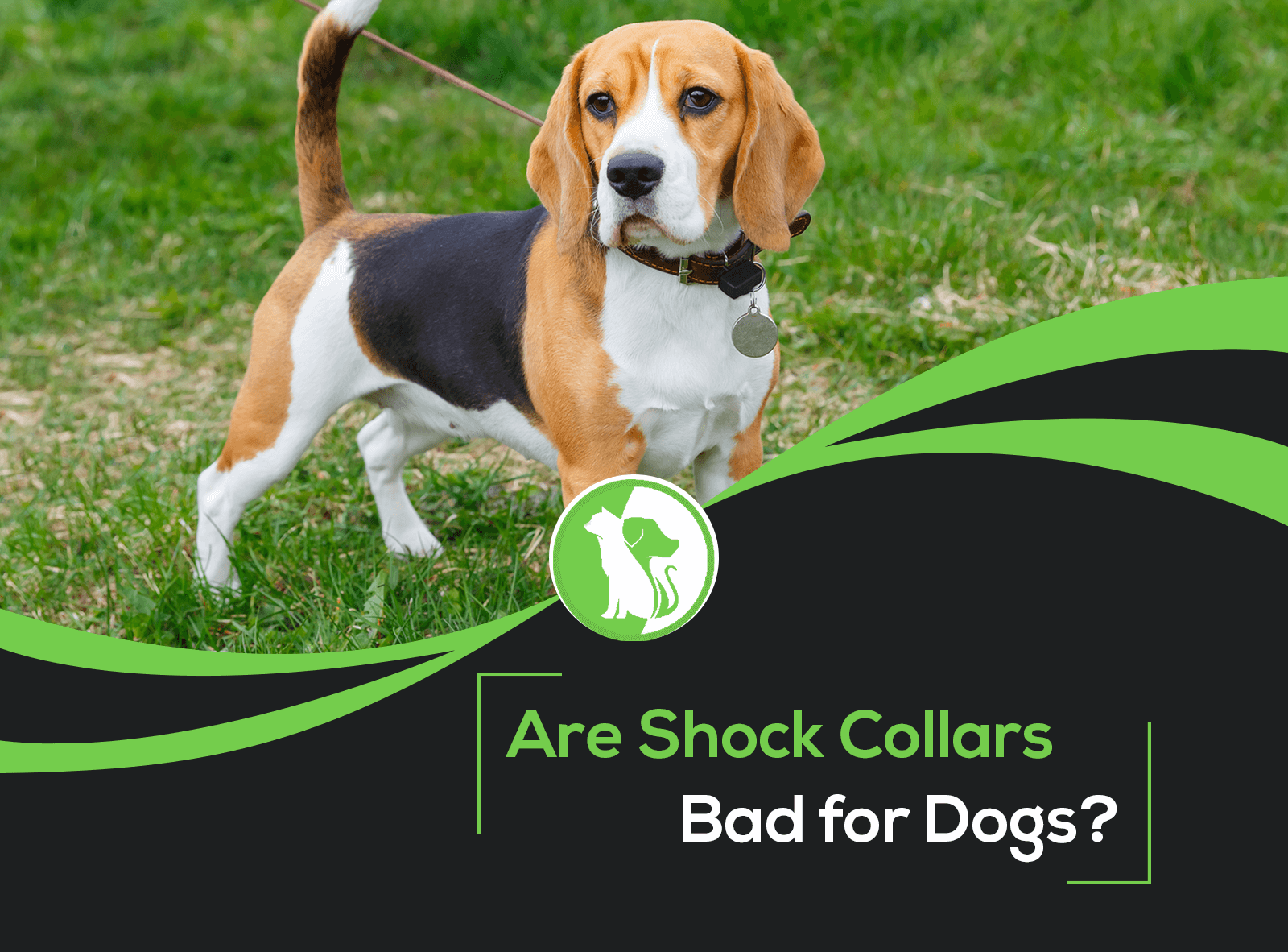 Are Shock Collars Bad for Dogs?