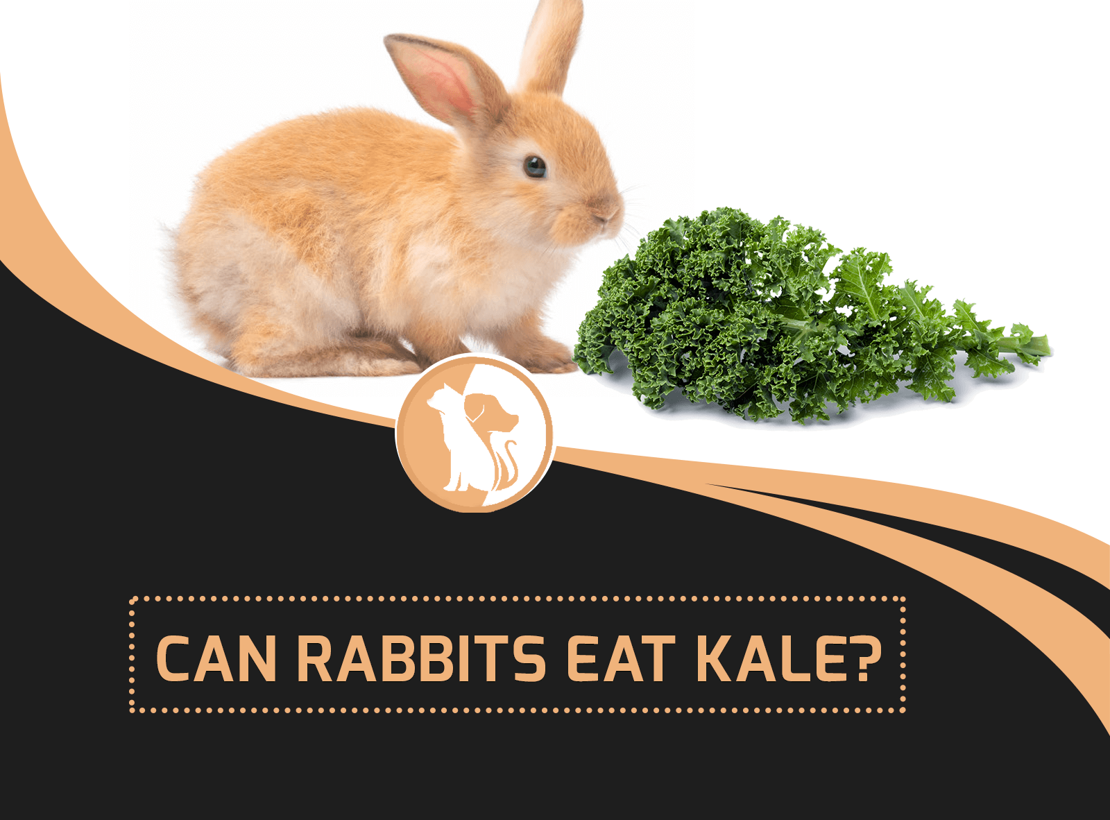 Can Rabbits Eat Kale?