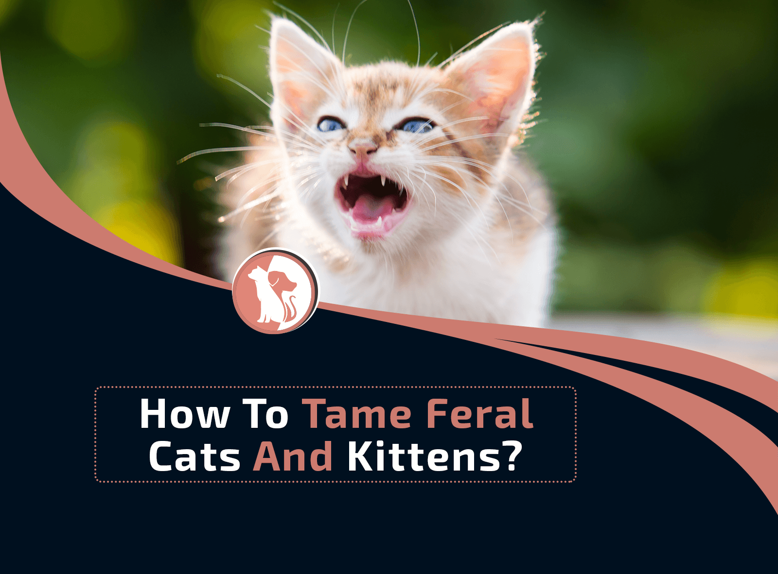 How To Tame Feral Cats And Kittens?