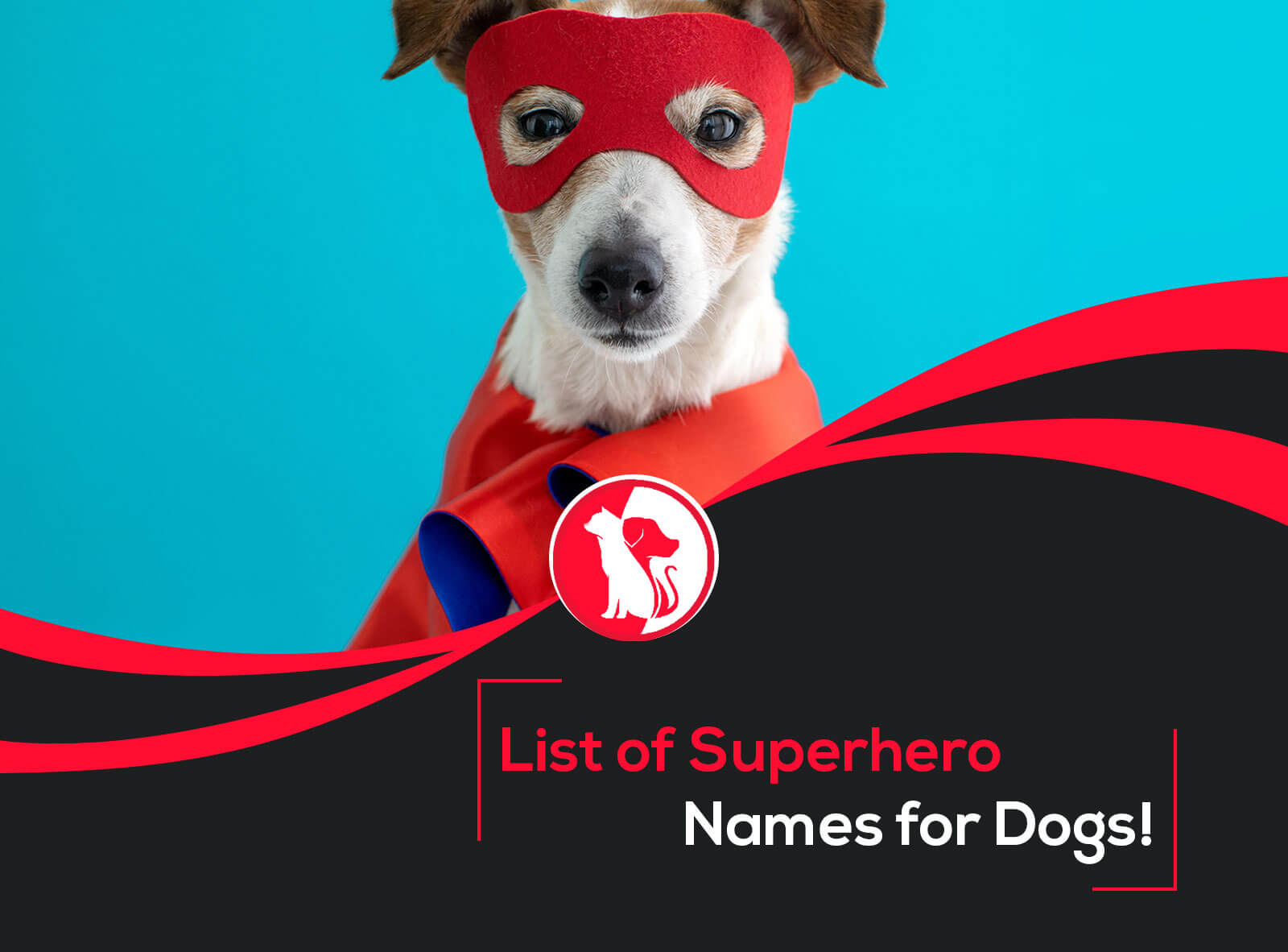 Huge List Of Superhero Names For Dogs
