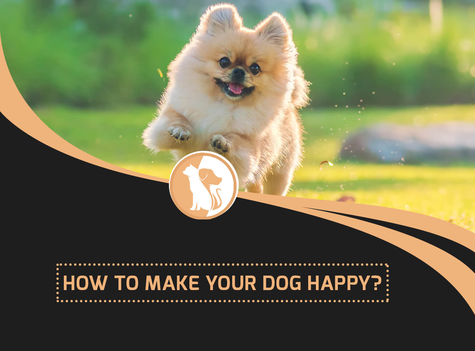 How to Make Your Dog Happy