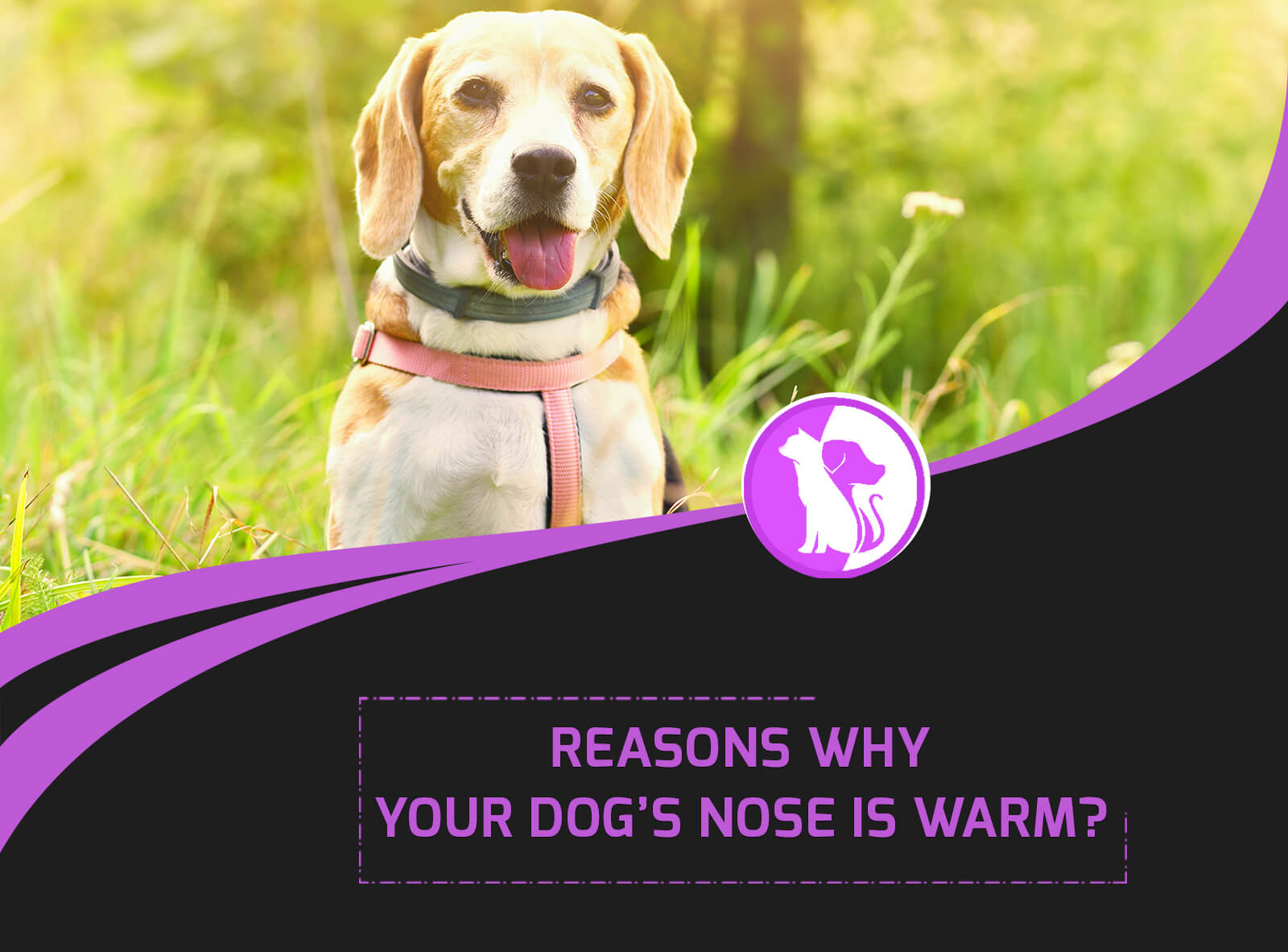 Reasons Why Your Dog's Nose Is Warm
