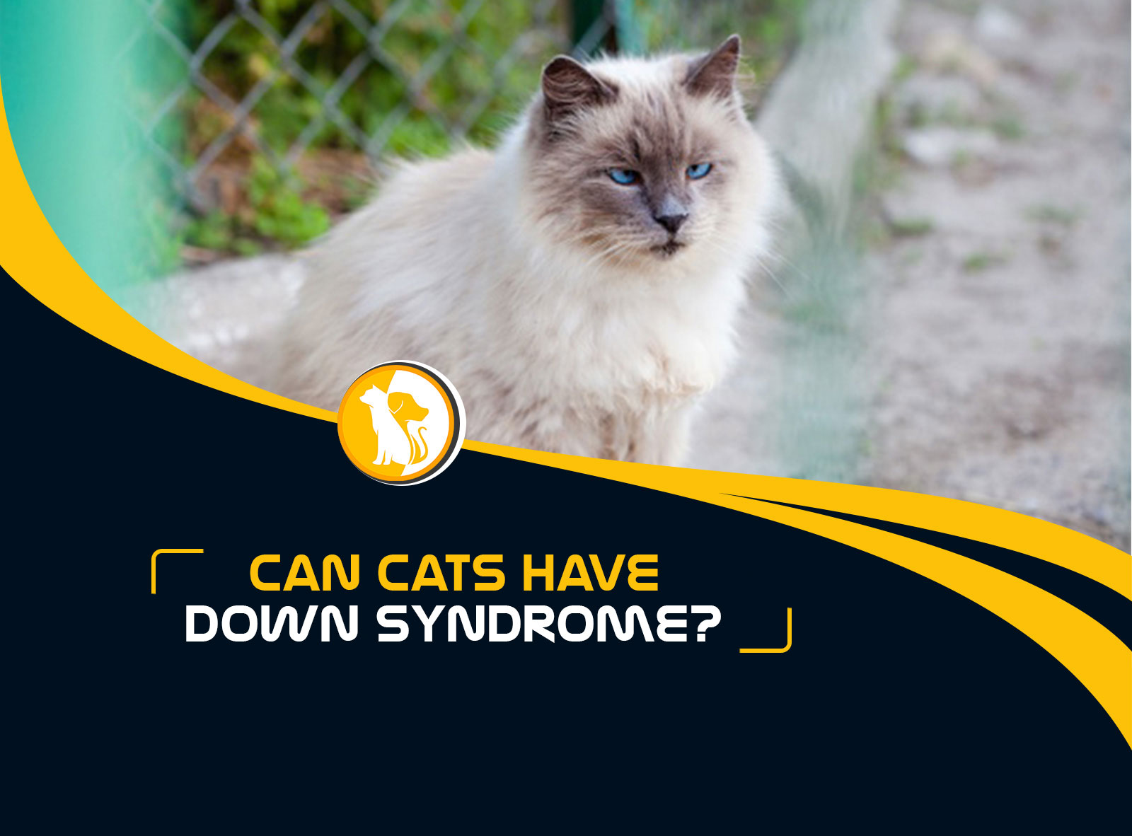 Can Cats Have Down Syndrome? Everything You Need to Know