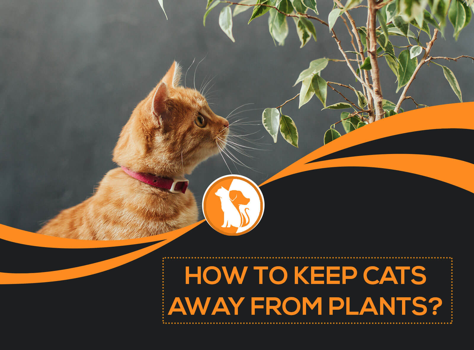 How to Keep Cats Away from Plants