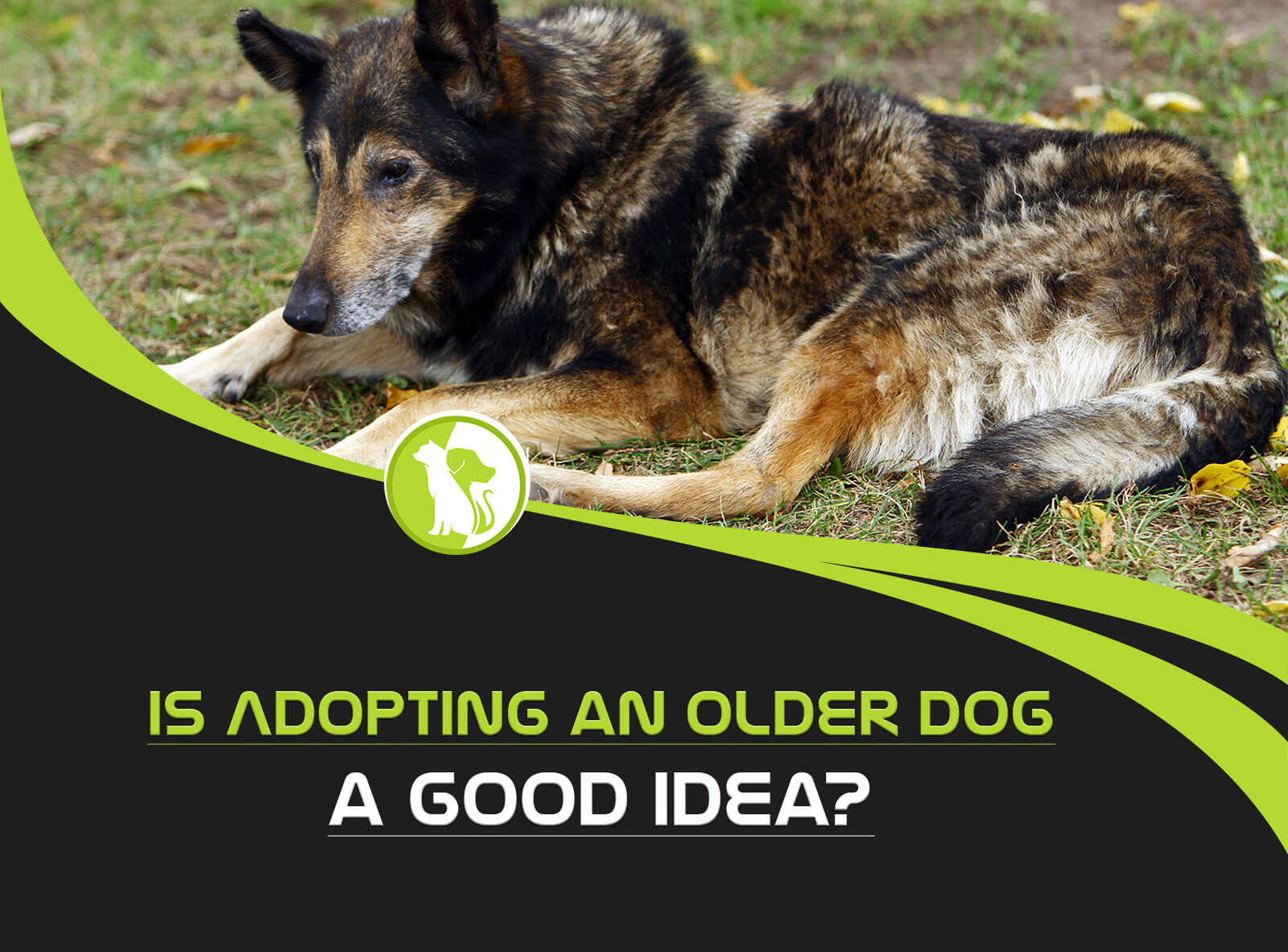 Is Adopting an Older Dog a Good Idea?