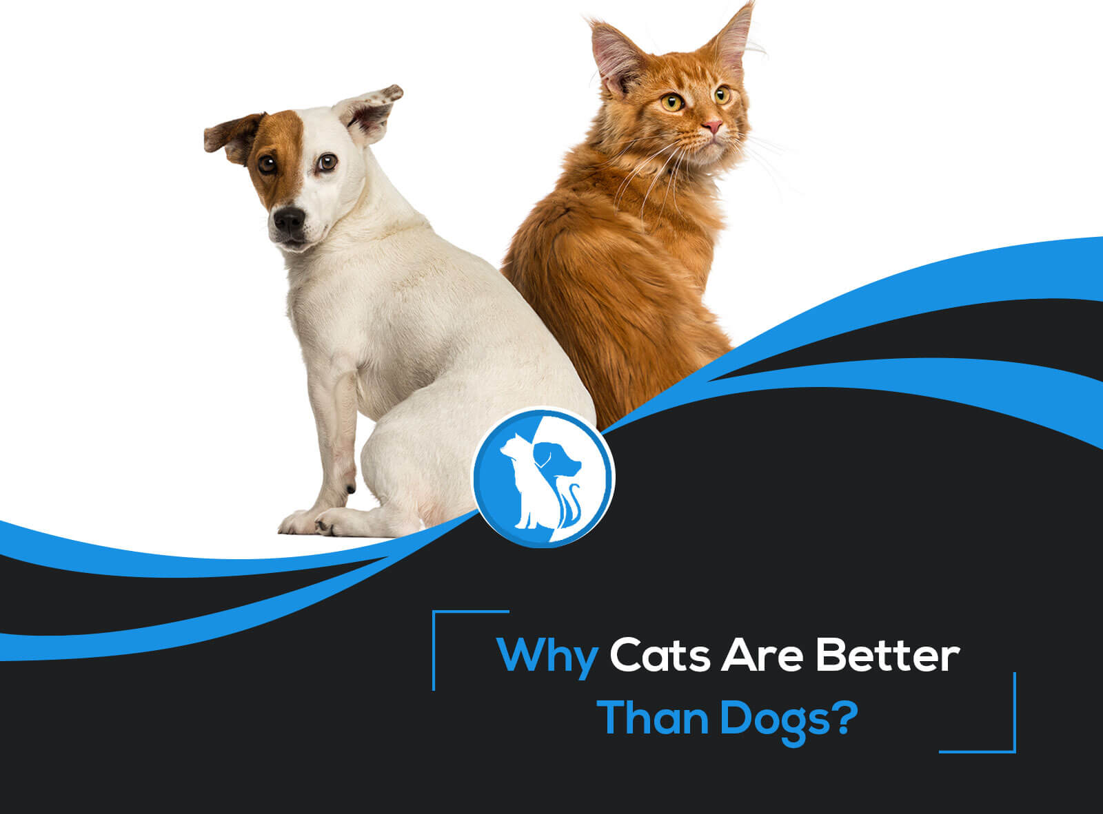 10 Reasons Why Cats Are Better Than Dogs