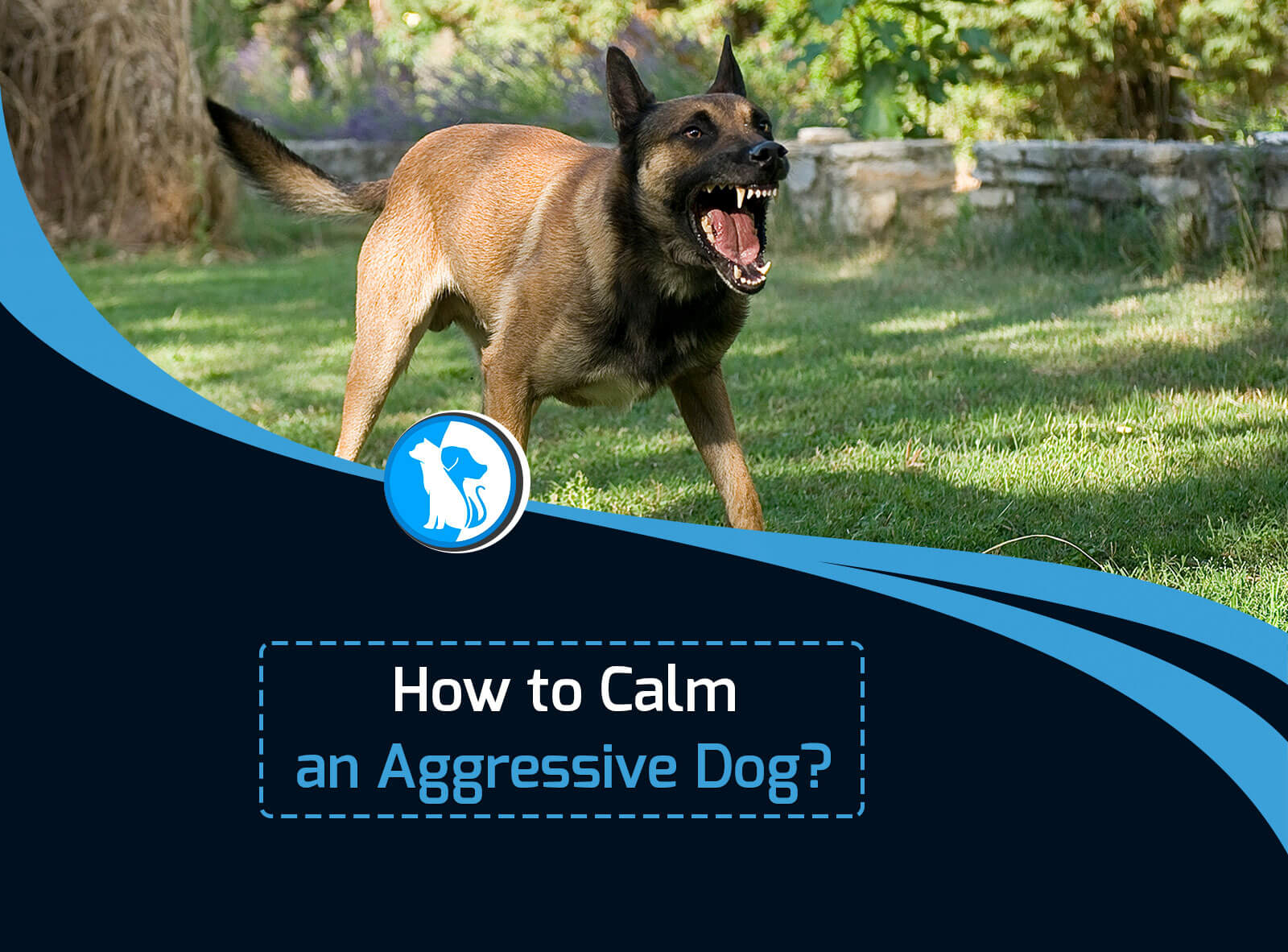 How to Calm an Aggressive Dog?