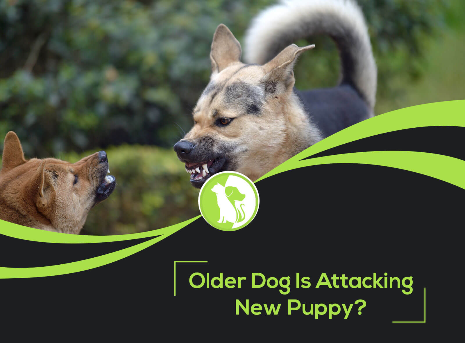 What to Do If My Older Dog Is Attacking New Puppy
