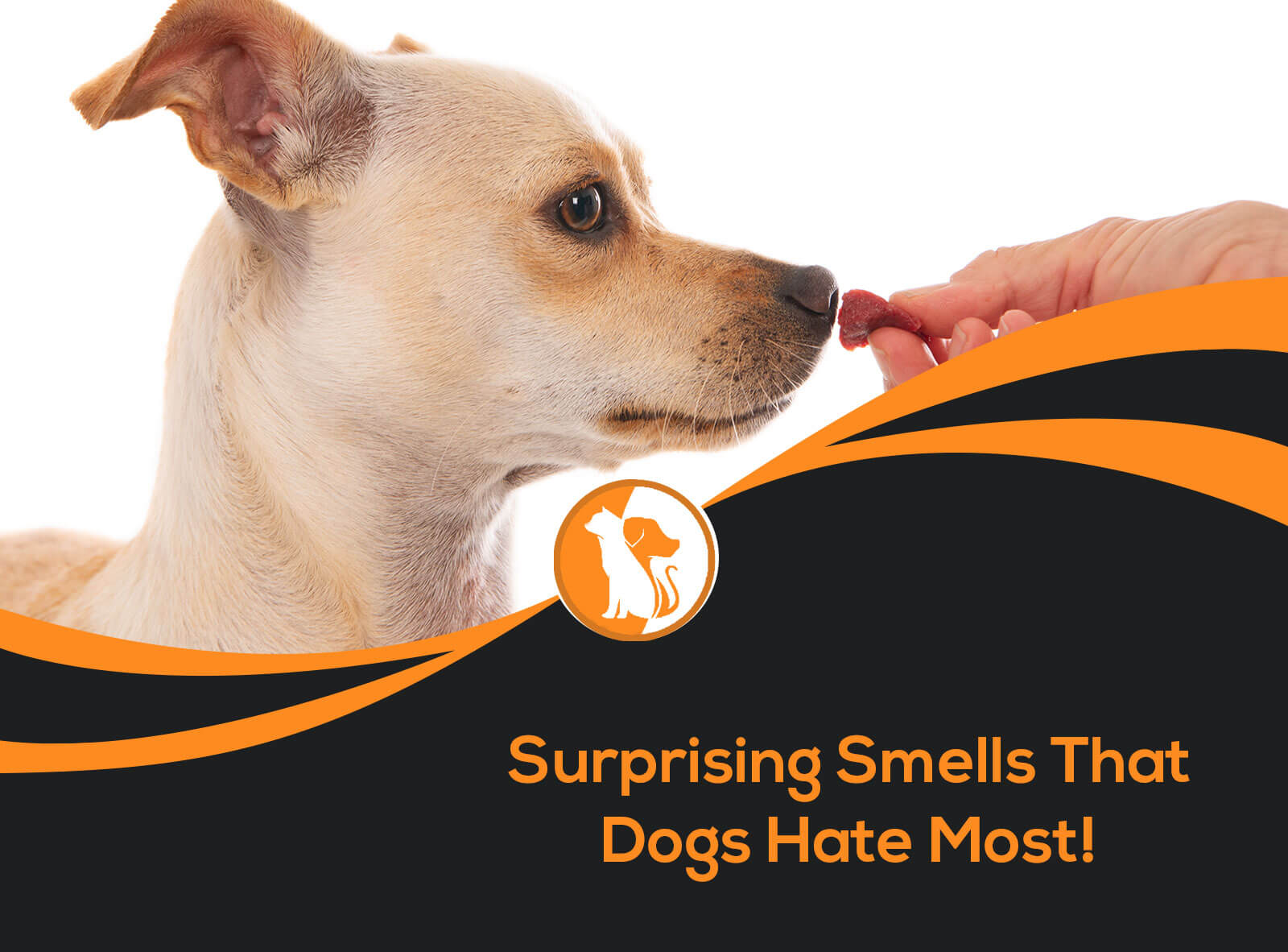 7 Surprising Smells Do Dogs Hate Most