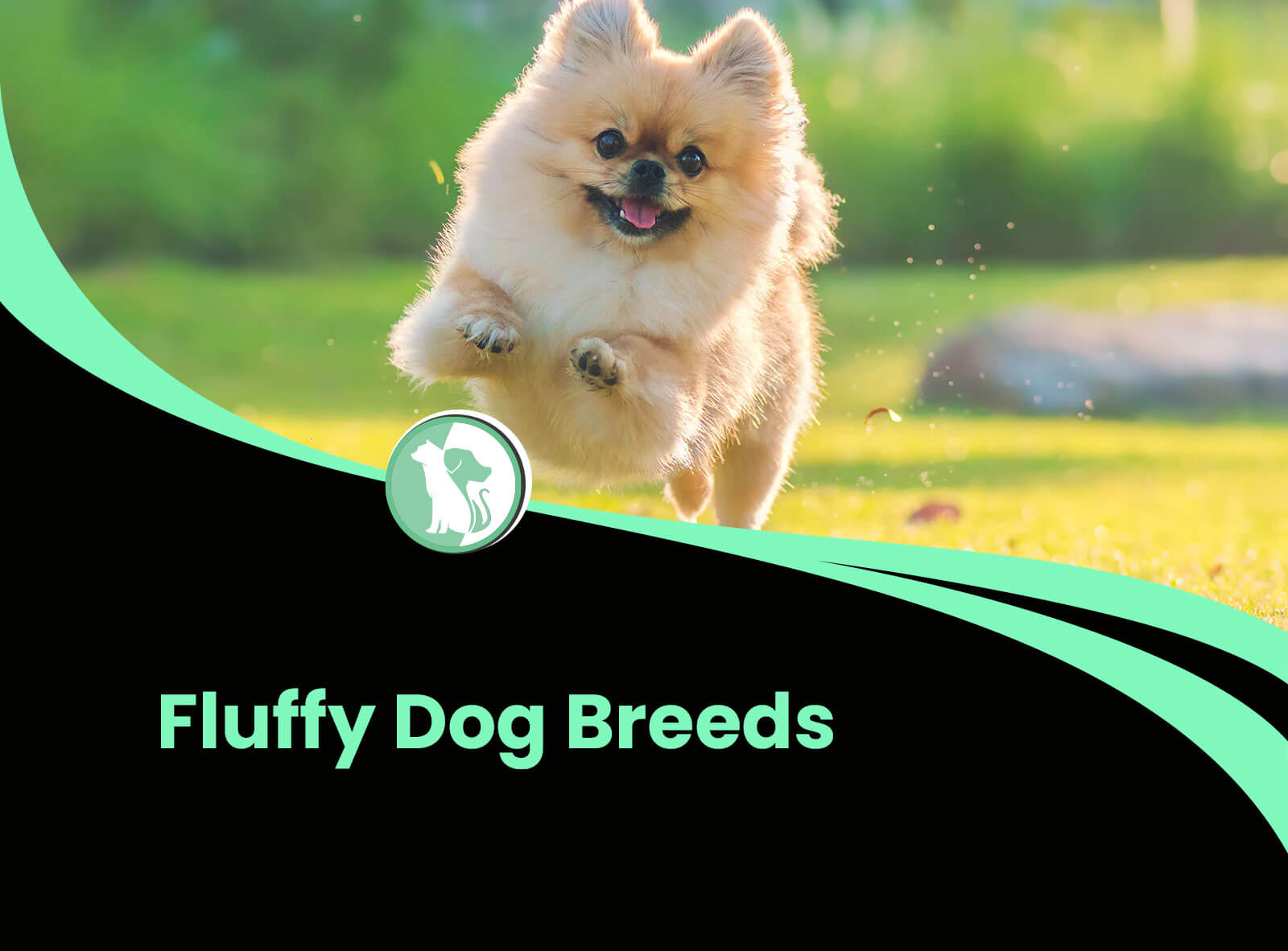 8 Big, Fluffy Dog Breeds That Are Absolutely Stunning