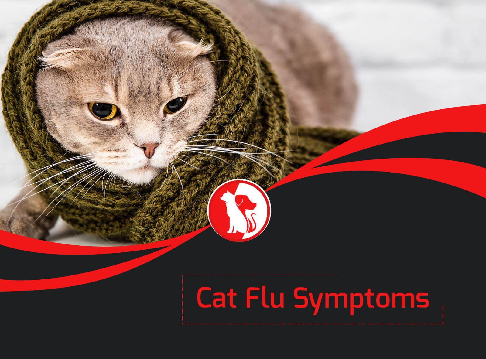 Cat Flu Symptoms: What to Look For?