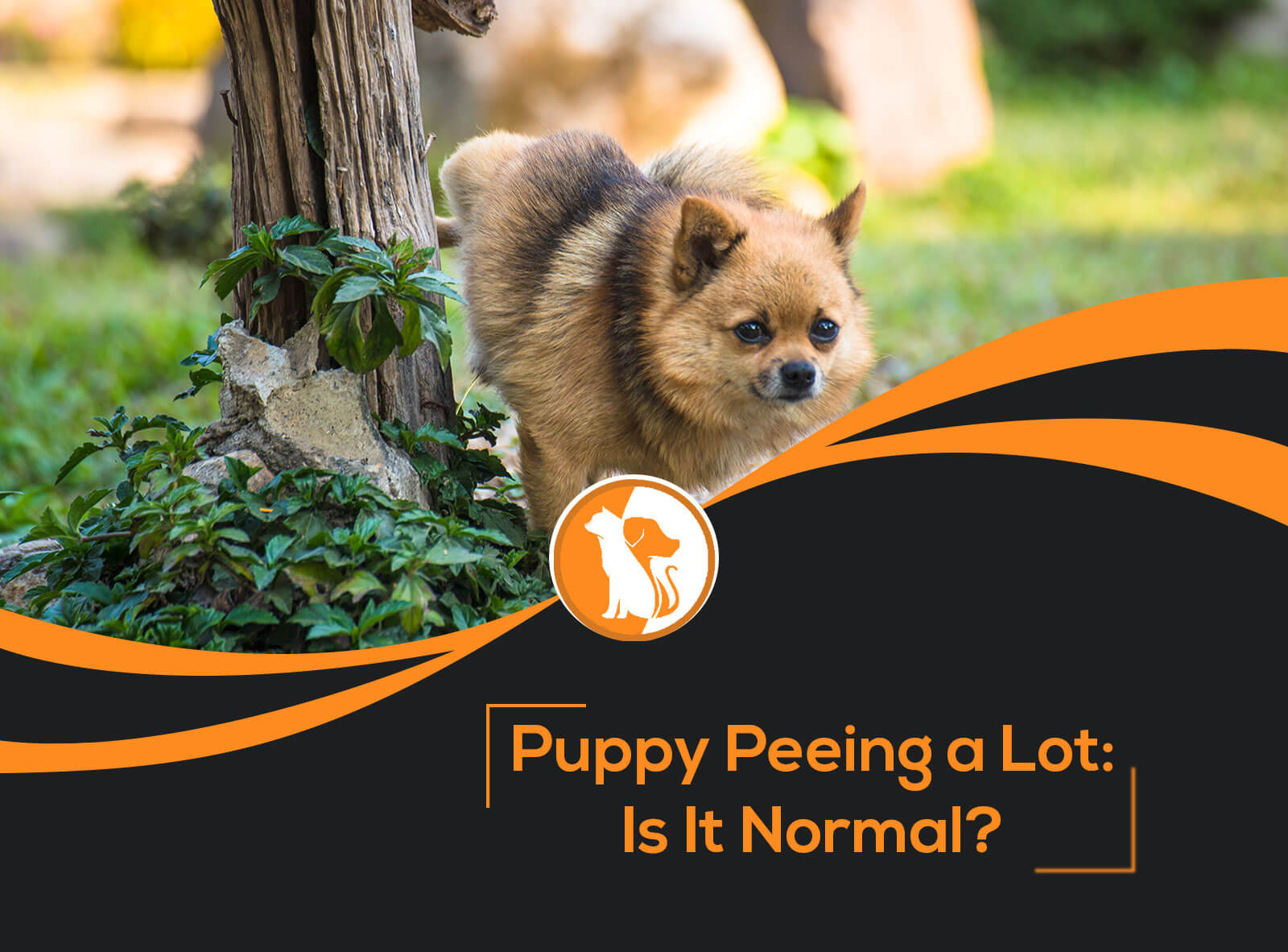 Puppy Peeing a Lot: Is It Normal?