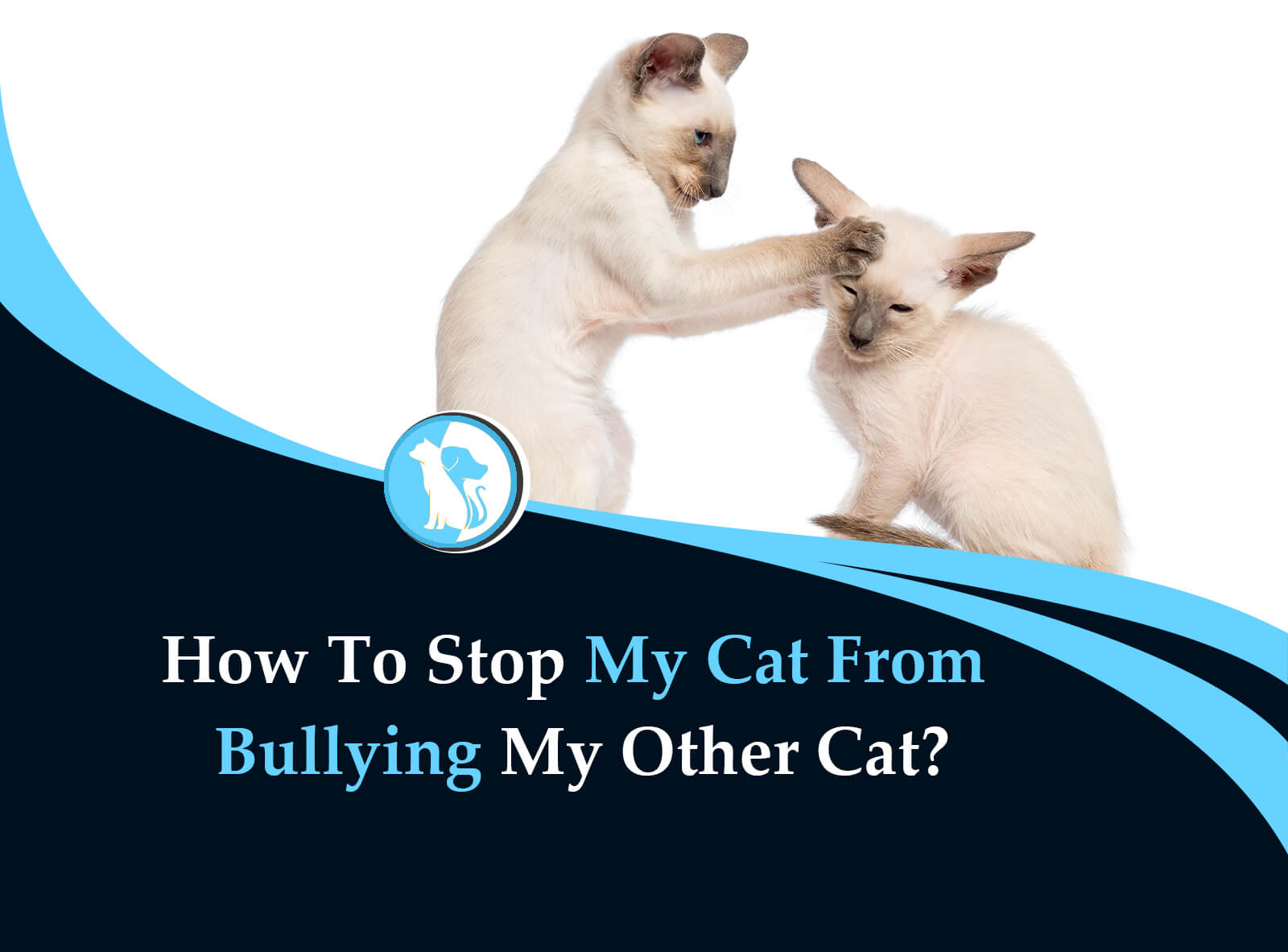 How To Stop My Cat From Bullying Other Cat?