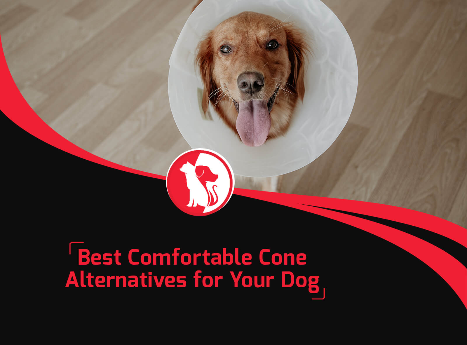 Best Comfortable Cone Alternatives for Your Dog