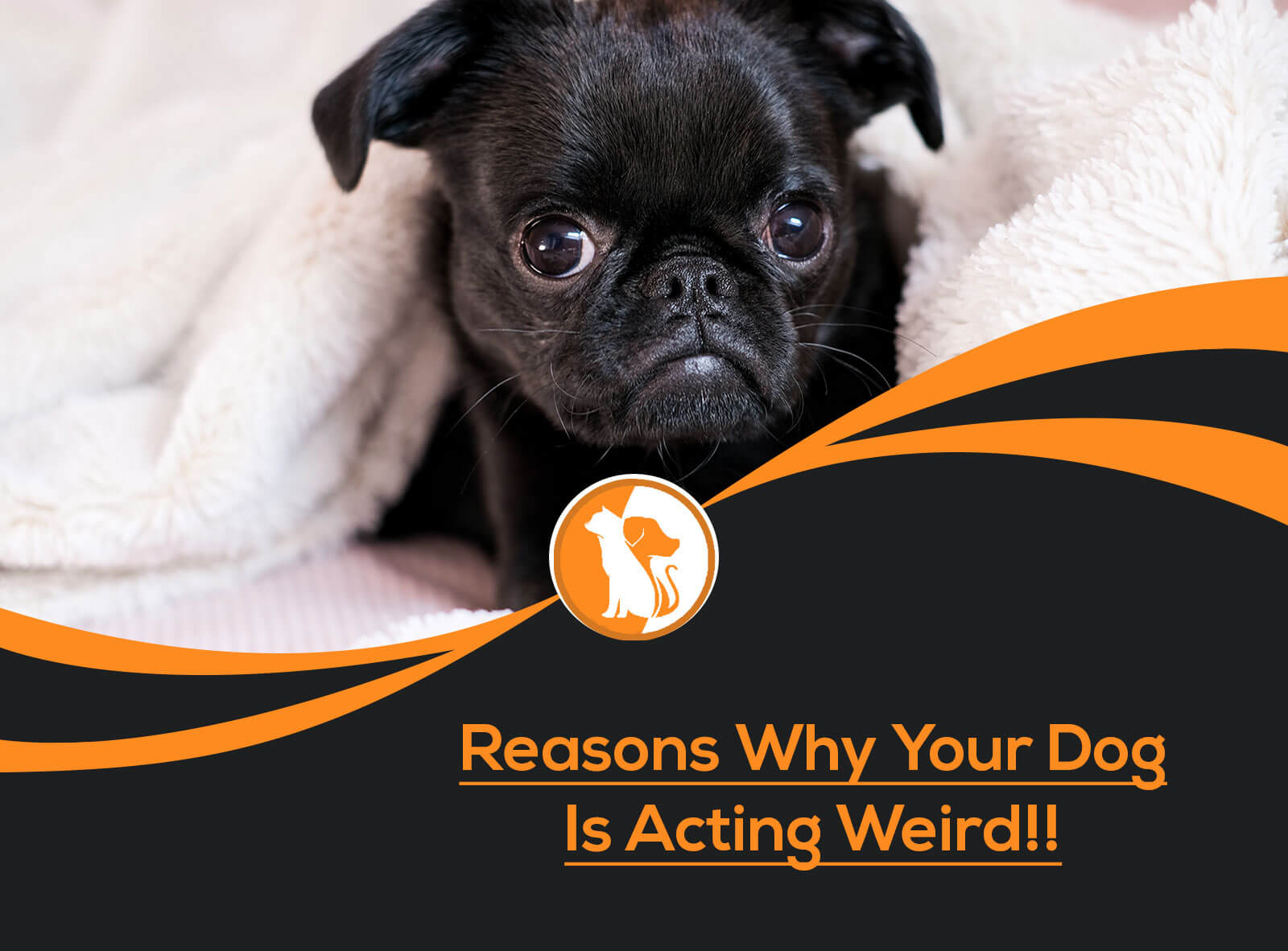 Reasons Why Your Dog Is Acting Weird