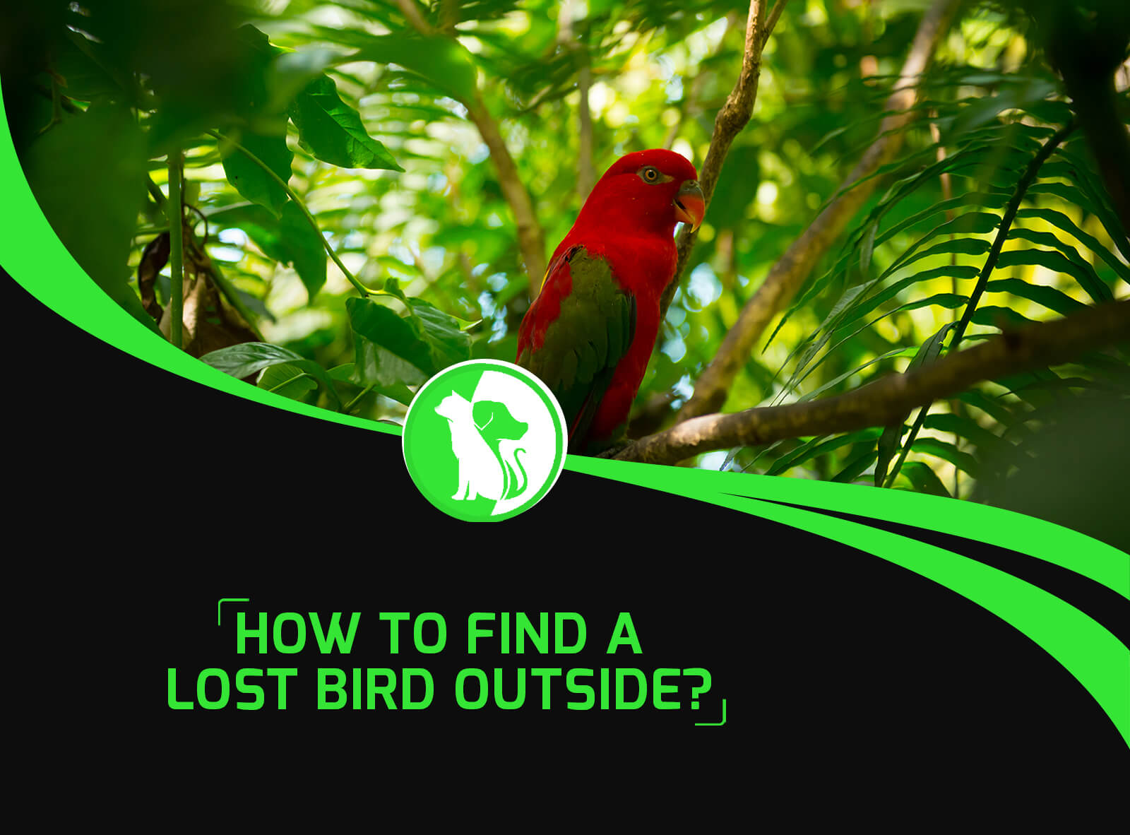 How To Find A Lost Bird Outside?