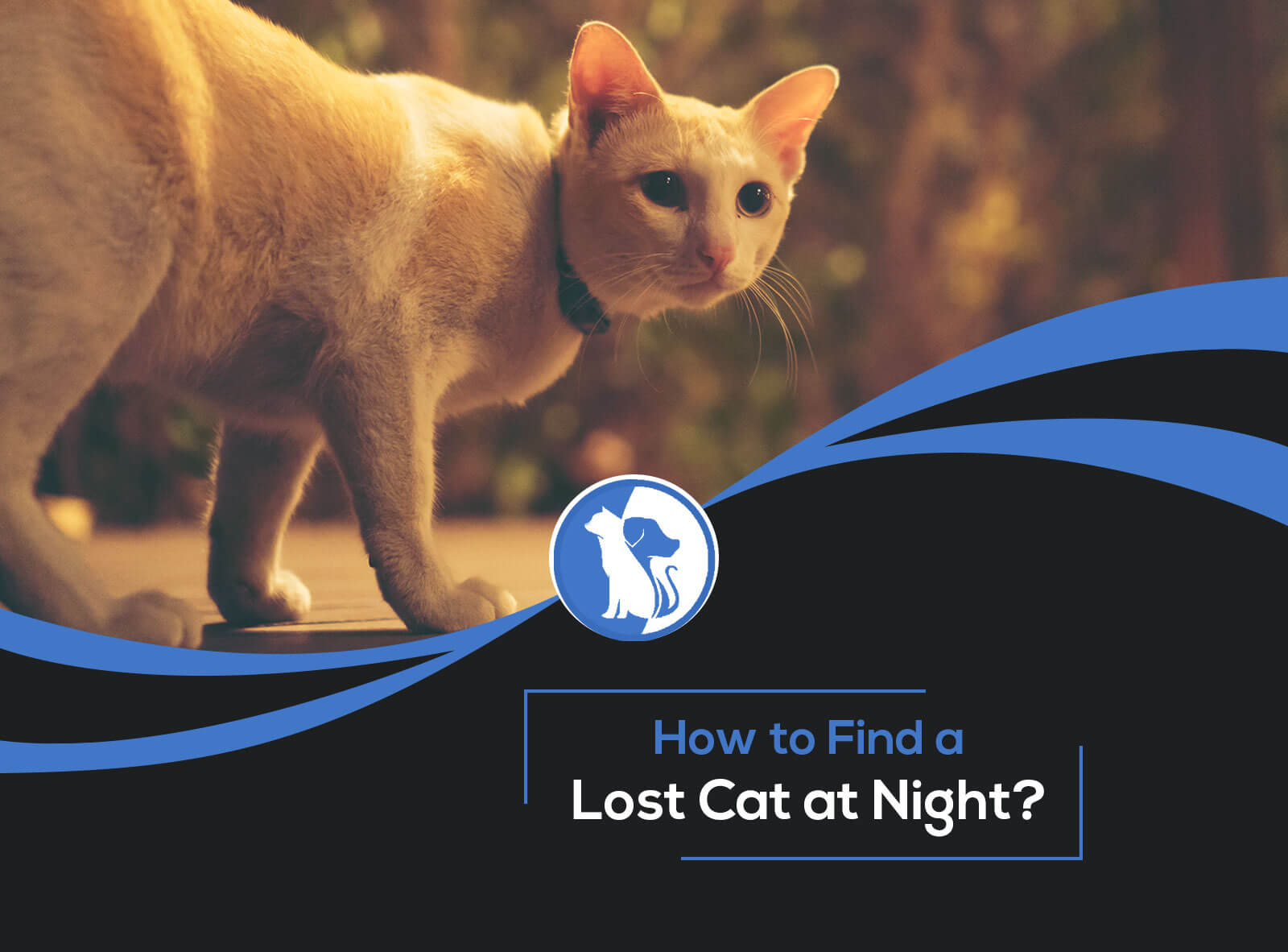 How to Find a Lost Cat at Night?