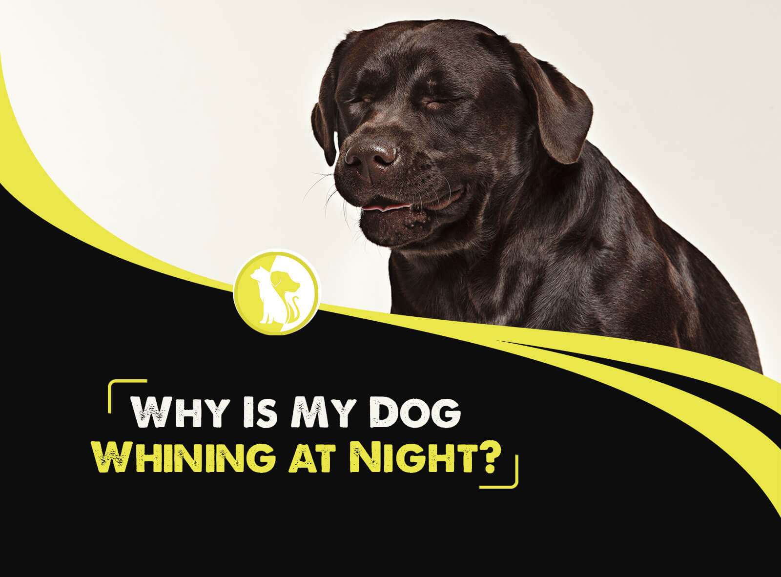 Why Is My Dog Whining at Night?