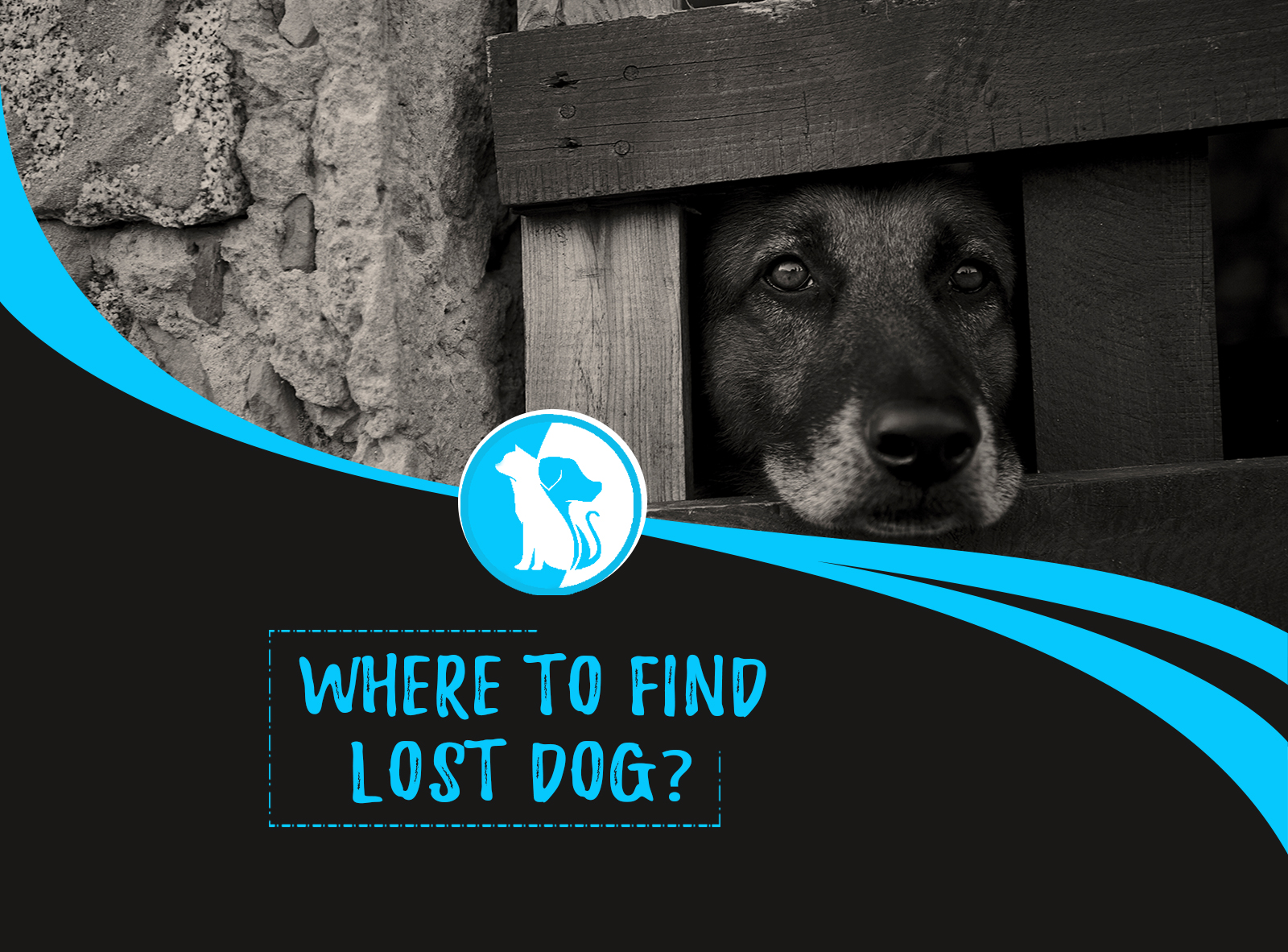 Where to Find Lost Dog? & Action Plans!