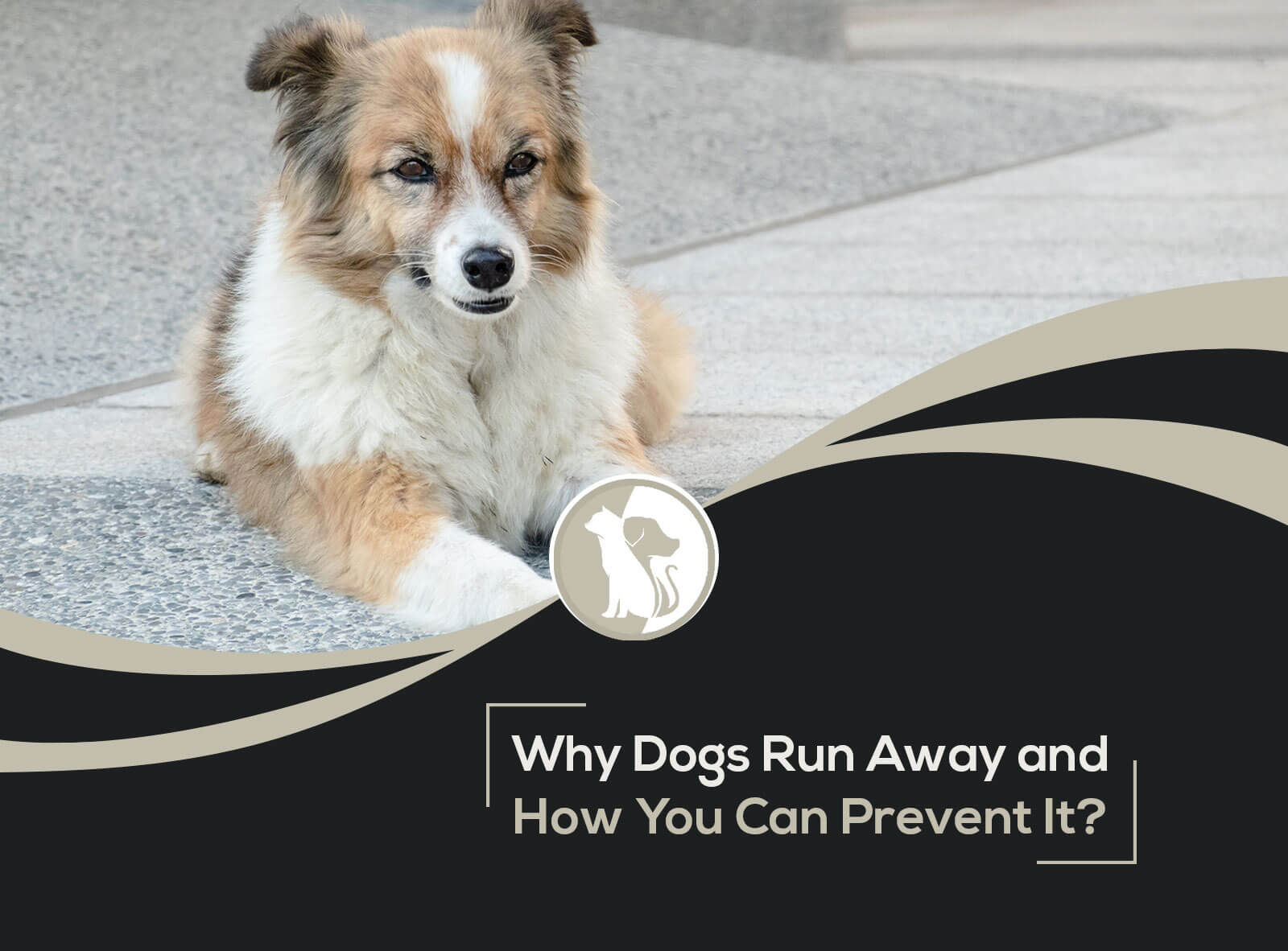 Why Do Dogs Run Away and How You Can Prevent It?