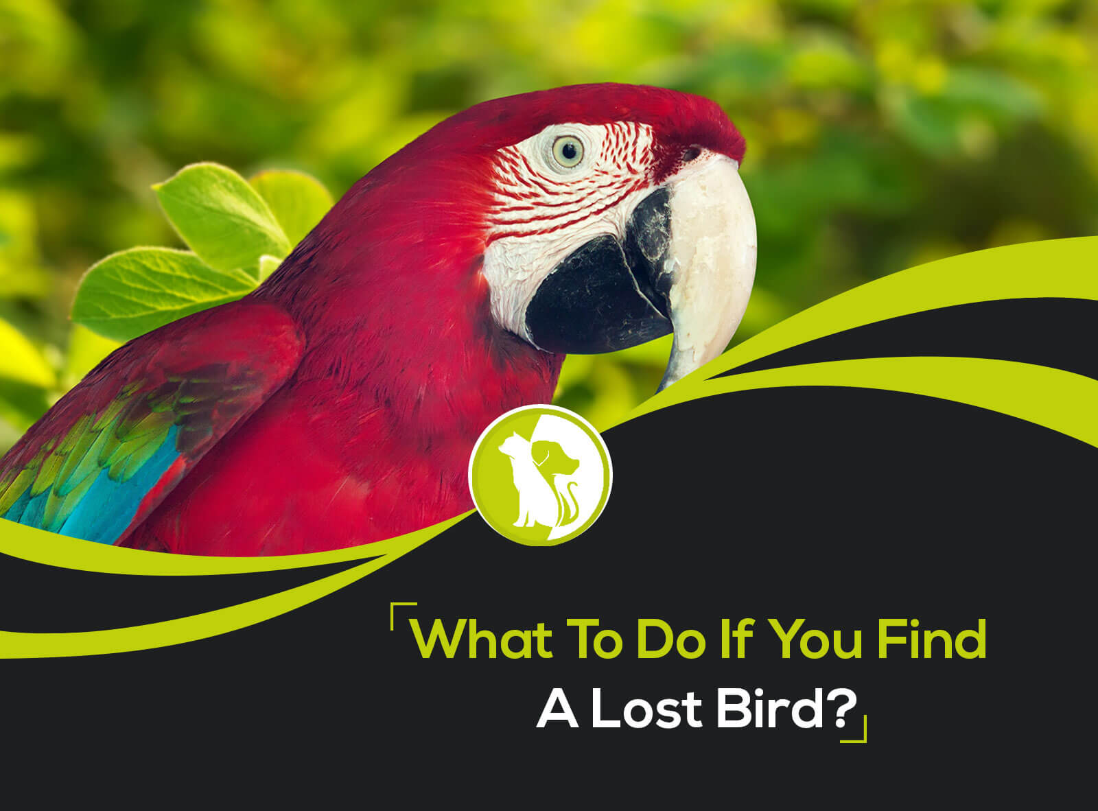 What to Do If You Find a Lost Bird?