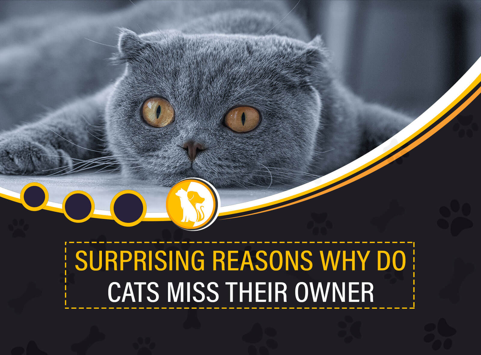 11 Surprising Reasons Why Do Cats Miss Their Owners