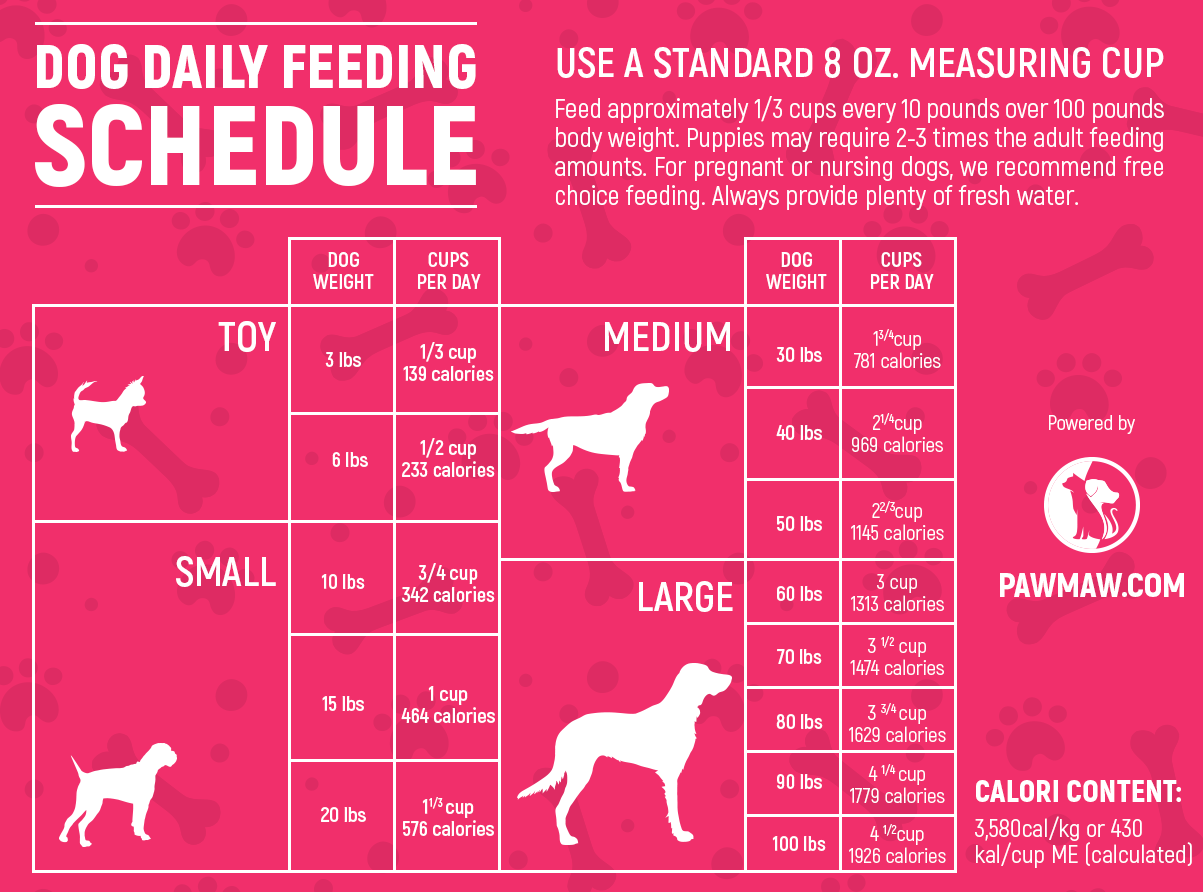 The Ultimate Dog Feeding Schedule Time And Chart