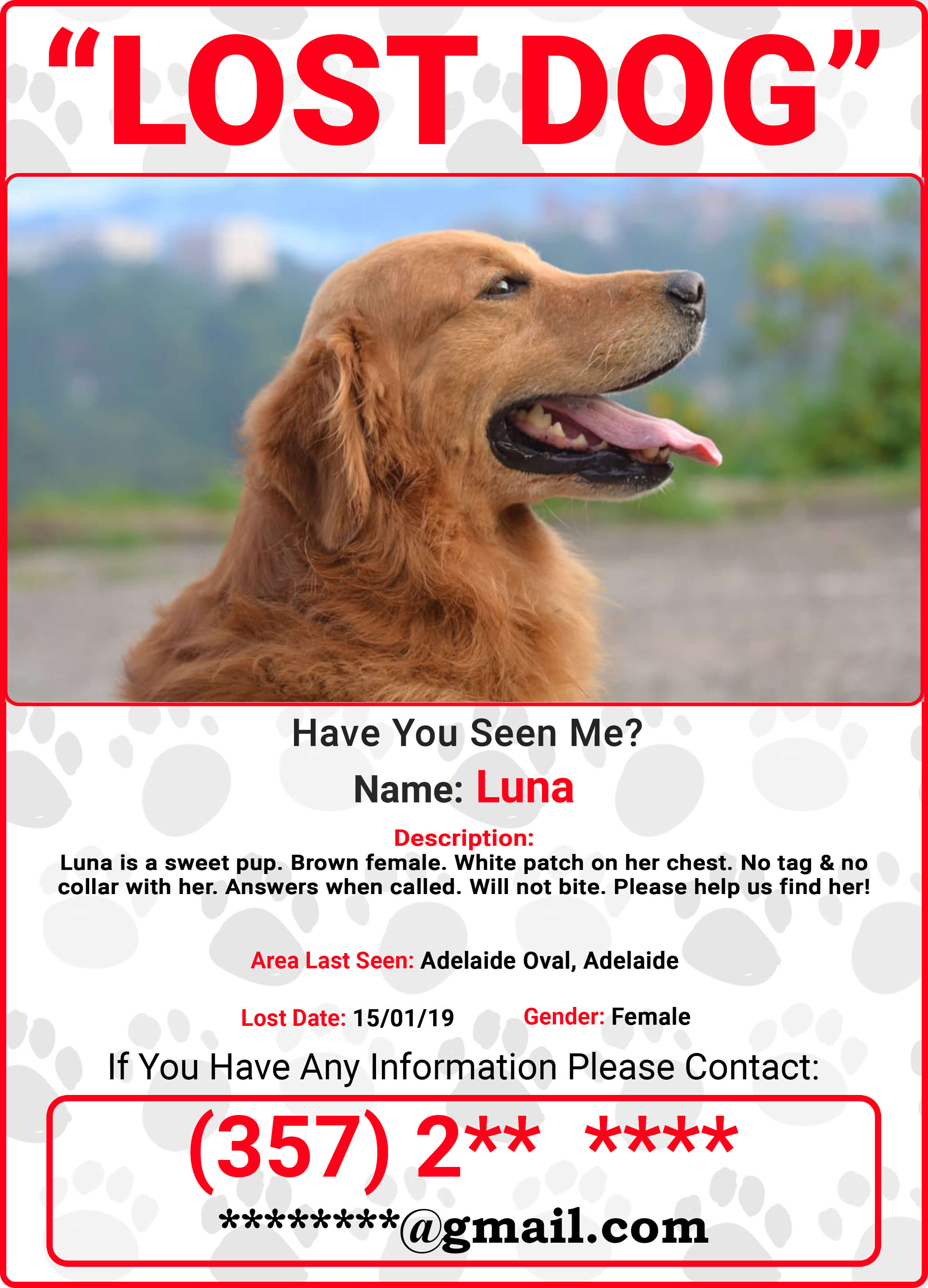 7 simplest ways to find your lost dog